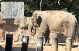動物園で象を見られなくなる日がくるそうです