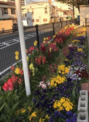 公園は花でいっぱい、ありがとう!